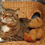 Cat Arthritis Pain Reliever