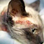 Cat Allergies Cure, Understand It Today