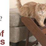 Cat Arthritis Medicine