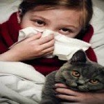 What is the best type of cat for a person with allergies?