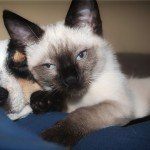 7 Truths About Canine and Feline Diabetes Symptoms