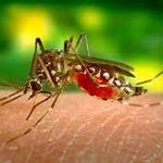 Zika Virus-How Big It Is?