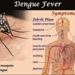 How Serious Is Dengue Fever?