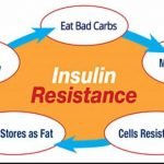 How Does The Body Become Resistant To Insulin?