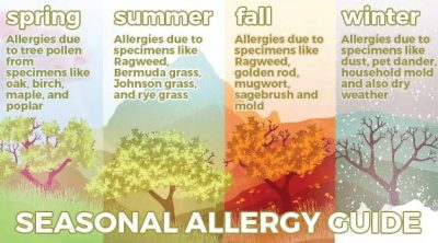 Seasonal Allergies Guide